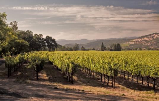 Groth Vineyards and Winery - Estate vineyards image 1